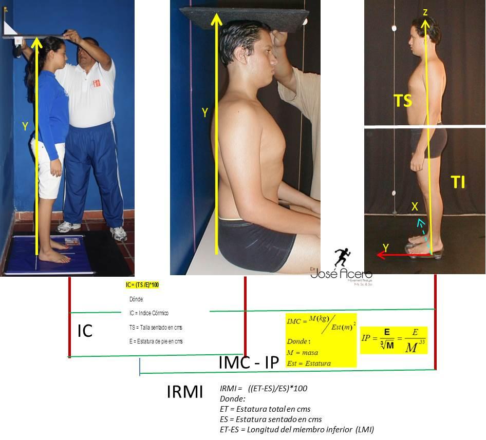 Antropometr a biomec nica codificaci n vertical de macro for Medidas antropometricas del cuerpo humano